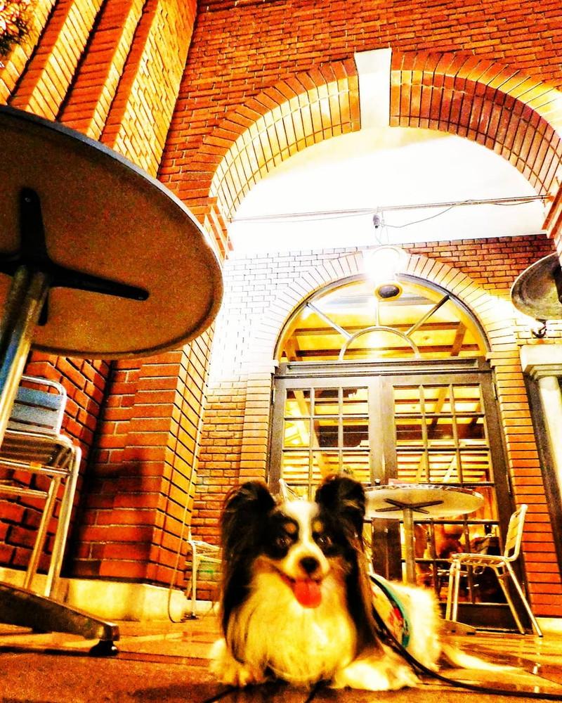 恵比寿ビヤステーションのテラス席 - 広場の犬たちを眺めているよ