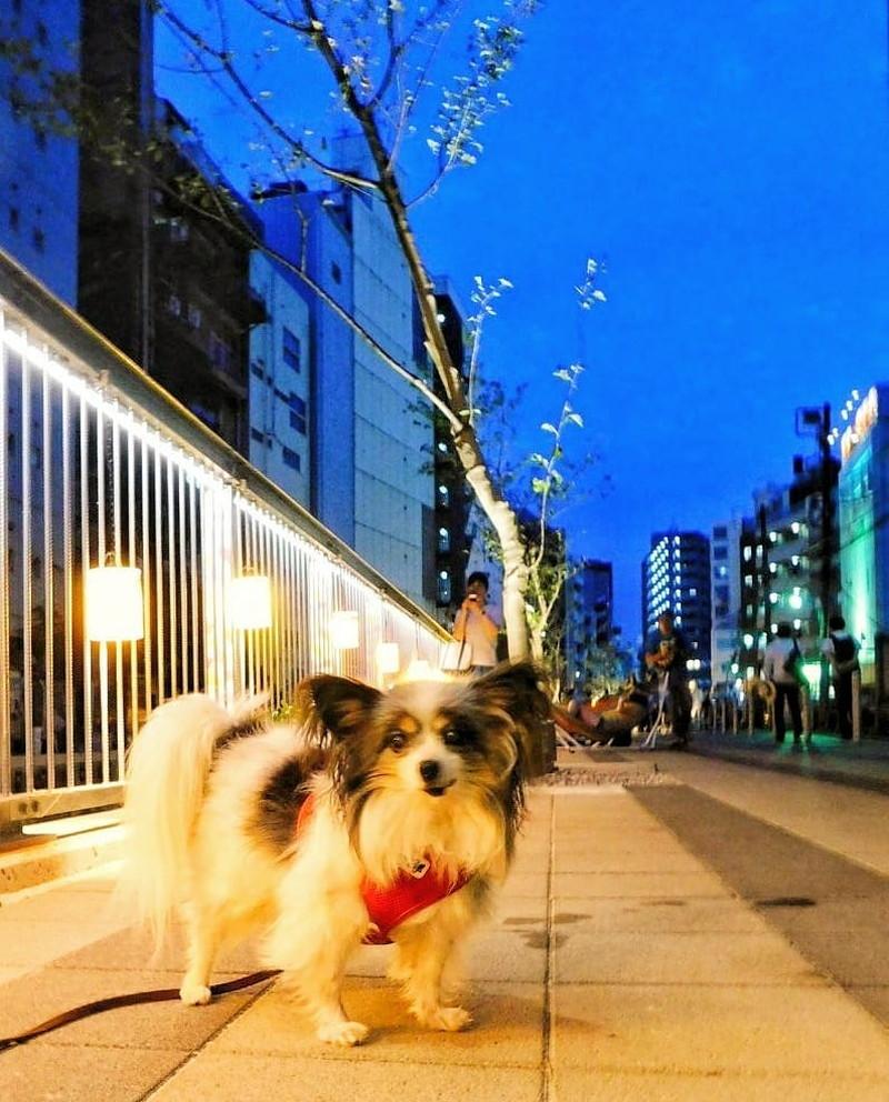 渋谷川沿いを一緒に歩こうね!夜もこんなに明るいよ。