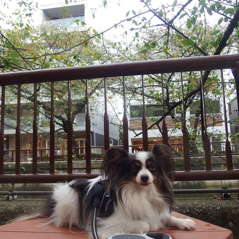 目黒川沿いにはベンチも並んでいるから休憩は楽なんだ
