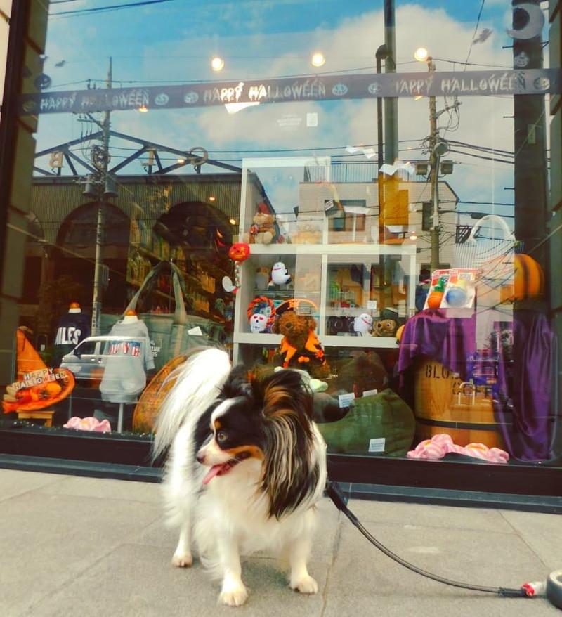 三宿交差点のペットサロンM-styleで僕の犬おやつを購入!