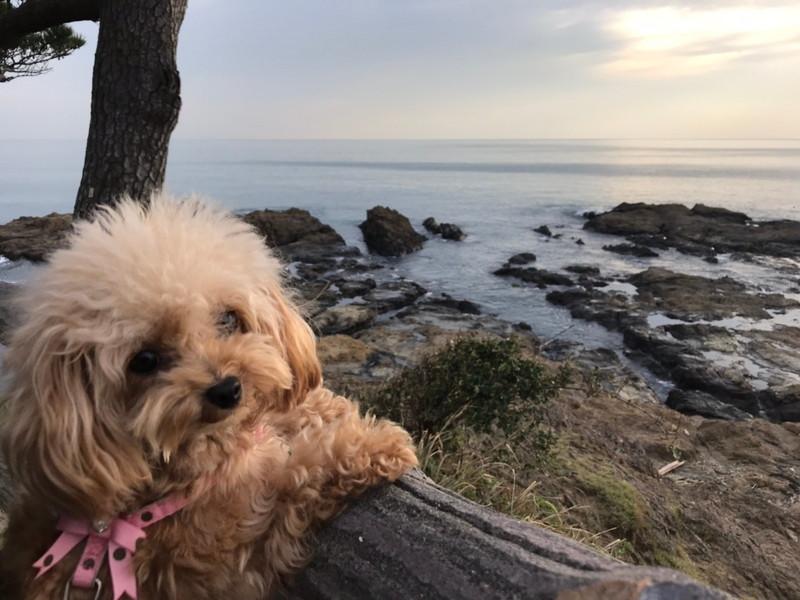秋谷海岸と愛犬サラ