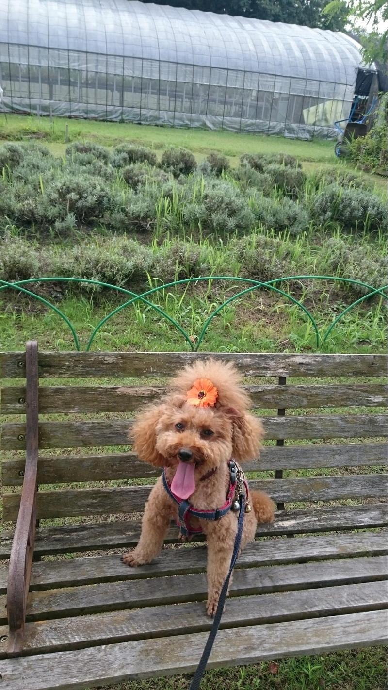 ハーブをバックに記念写真でも暑いと舌を出す愛犬 ハーブロードいどべにて