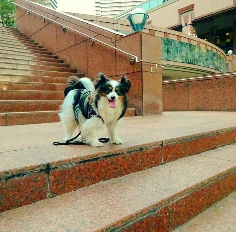 恵比寿ガーデンプレイスでの愛犬