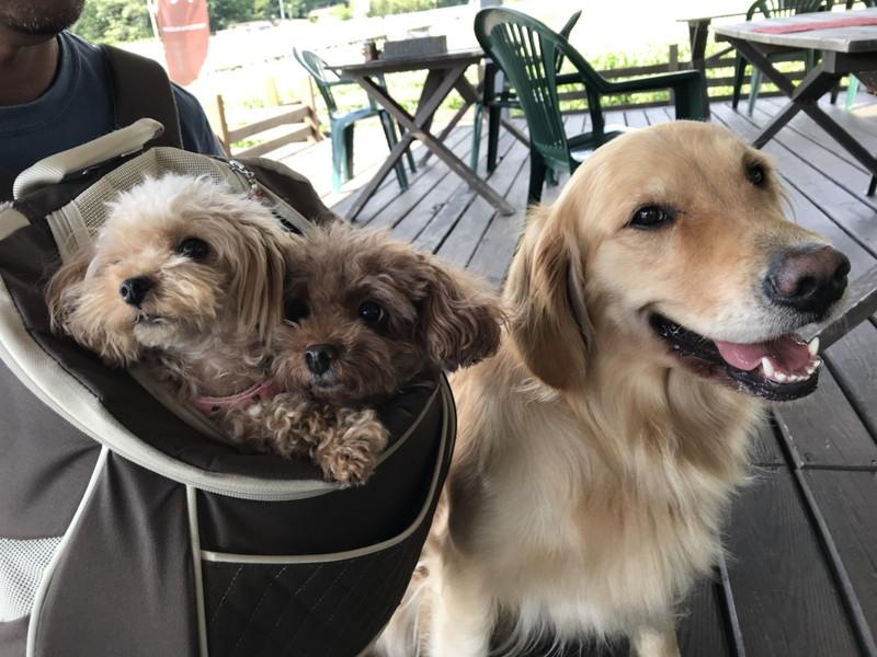 愛犬と看板犬のメイちゃん