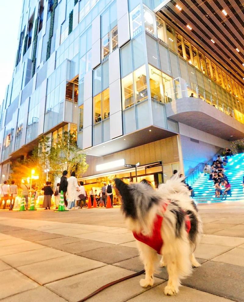これが渋谷ストリーム!