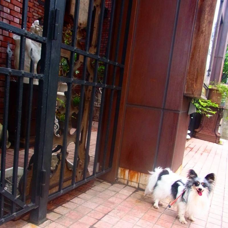 三宿のアンティーク家具屋さんThe Globeの一階カフェは犬もオッケーだよ