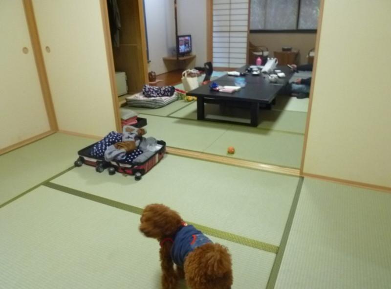 大きな部屋にキョロキョロする愛犬