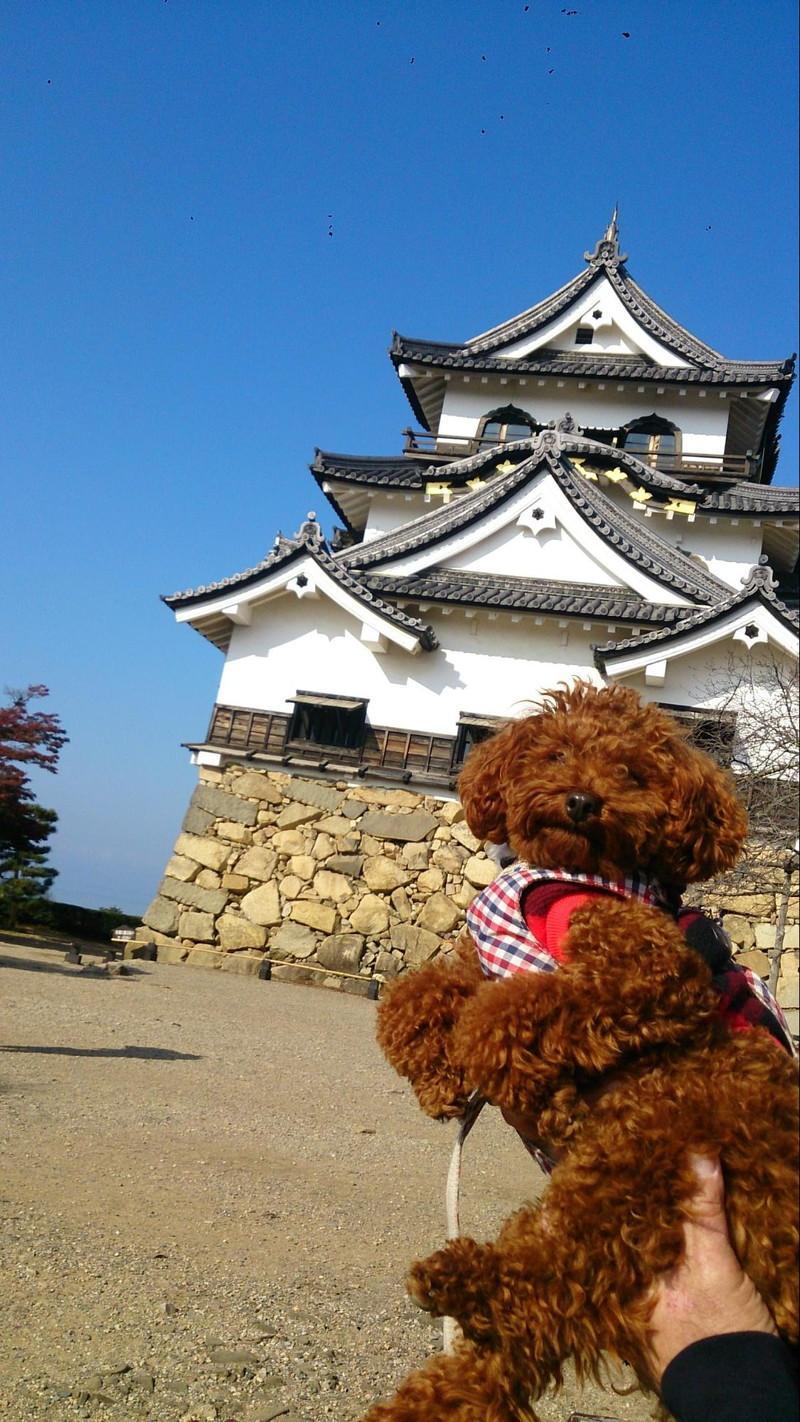 高く持ち上げられた愛犬と彦根城
