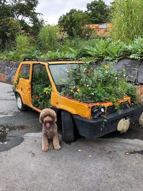 車の中にも花々が植えられています