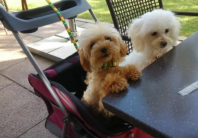 ブラッセリーフローラのテラス席と愛犬