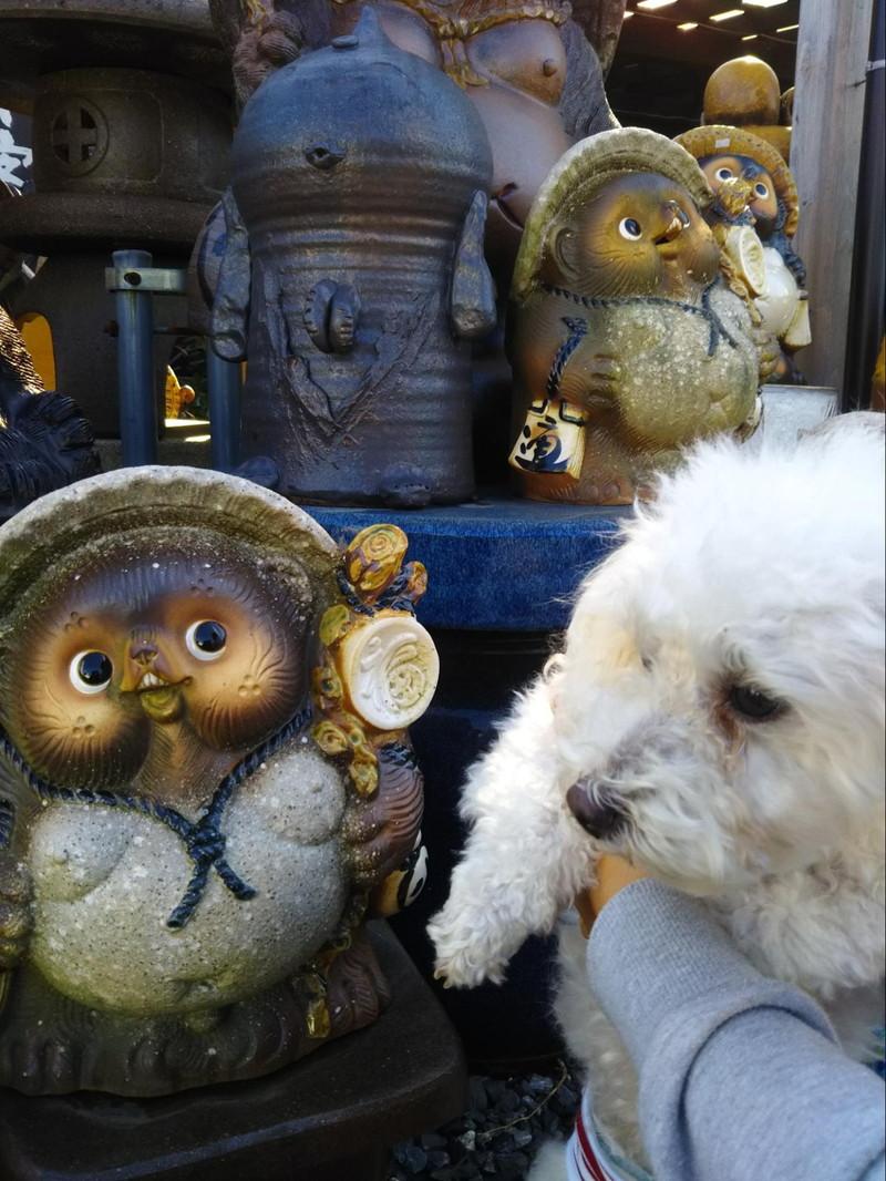 たぬきと愛犬のツーショット
