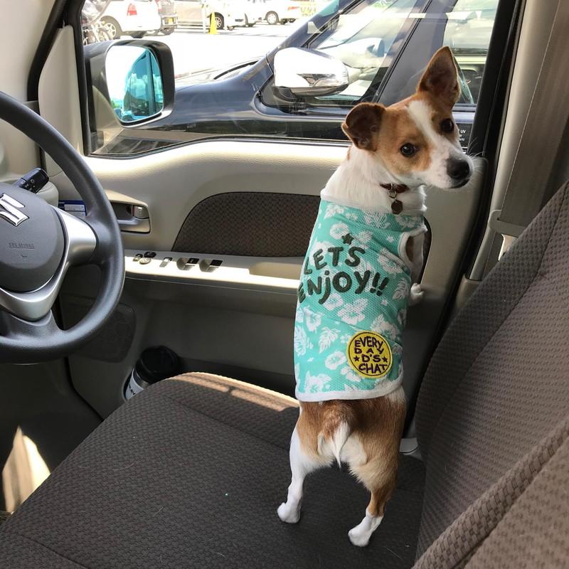 冷感ウェアを着て準備ばっちりの愛犬ラスティー