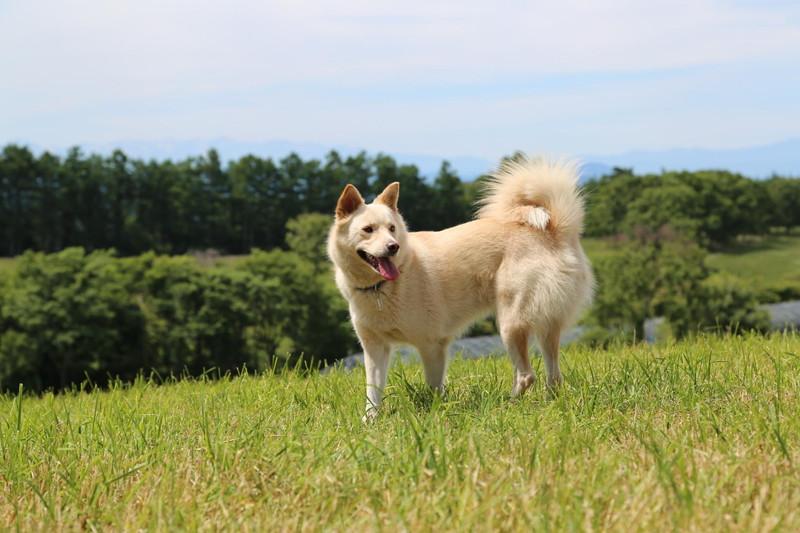 牧草地の中、たたずむ愛犬