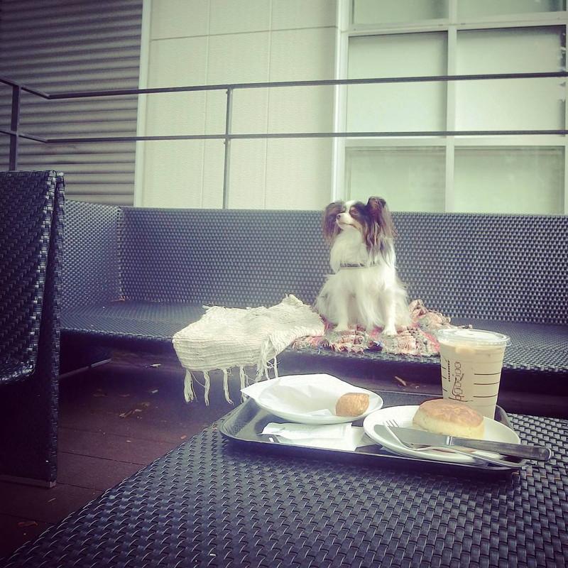 この写真を撮った1秒後にテーブル上のスコーンを鳩に食べられました