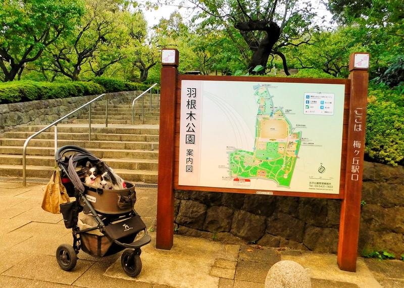 羽根木公園は以外と広いから初めての人は園内マップを見てね!