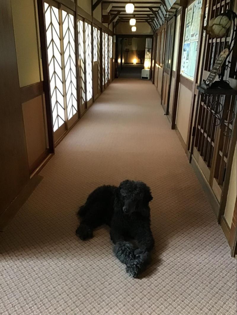 野辺山荘の看板犬