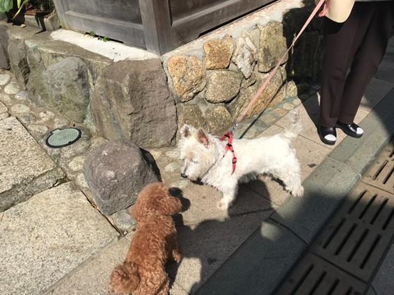 江ノ島 参道の愛犬