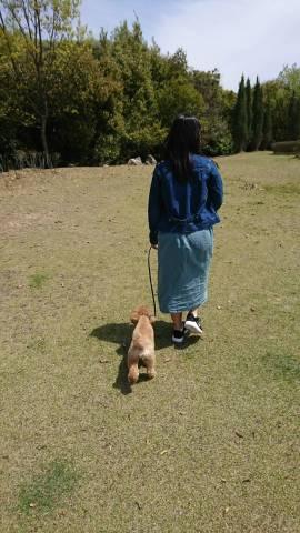 サービスエリアで散歩をする愛犬