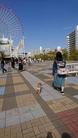 海遊館付近で愛犬と散歩