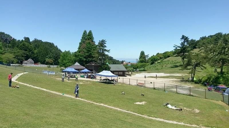 広大な六甲山カンツリーハウスのドッグラン