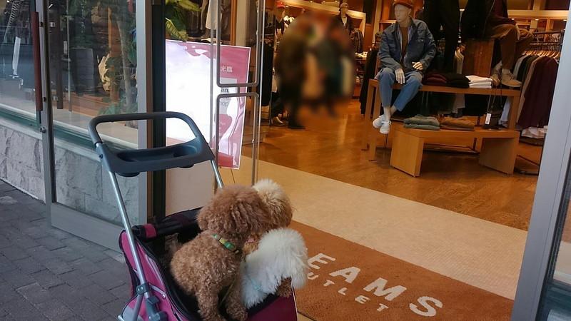御殿場プレミアム・アウトレット BEAMSと愛犬