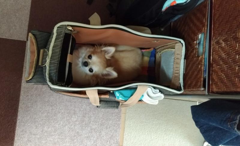 出発を待ちわびる愛犬