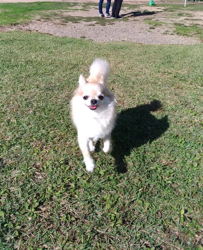笑顔で駆け寄る愛犬
