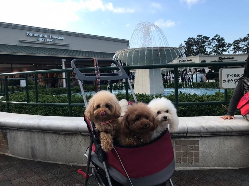 御殿場プレミアム・アウトレット 噴水前の愛犬
