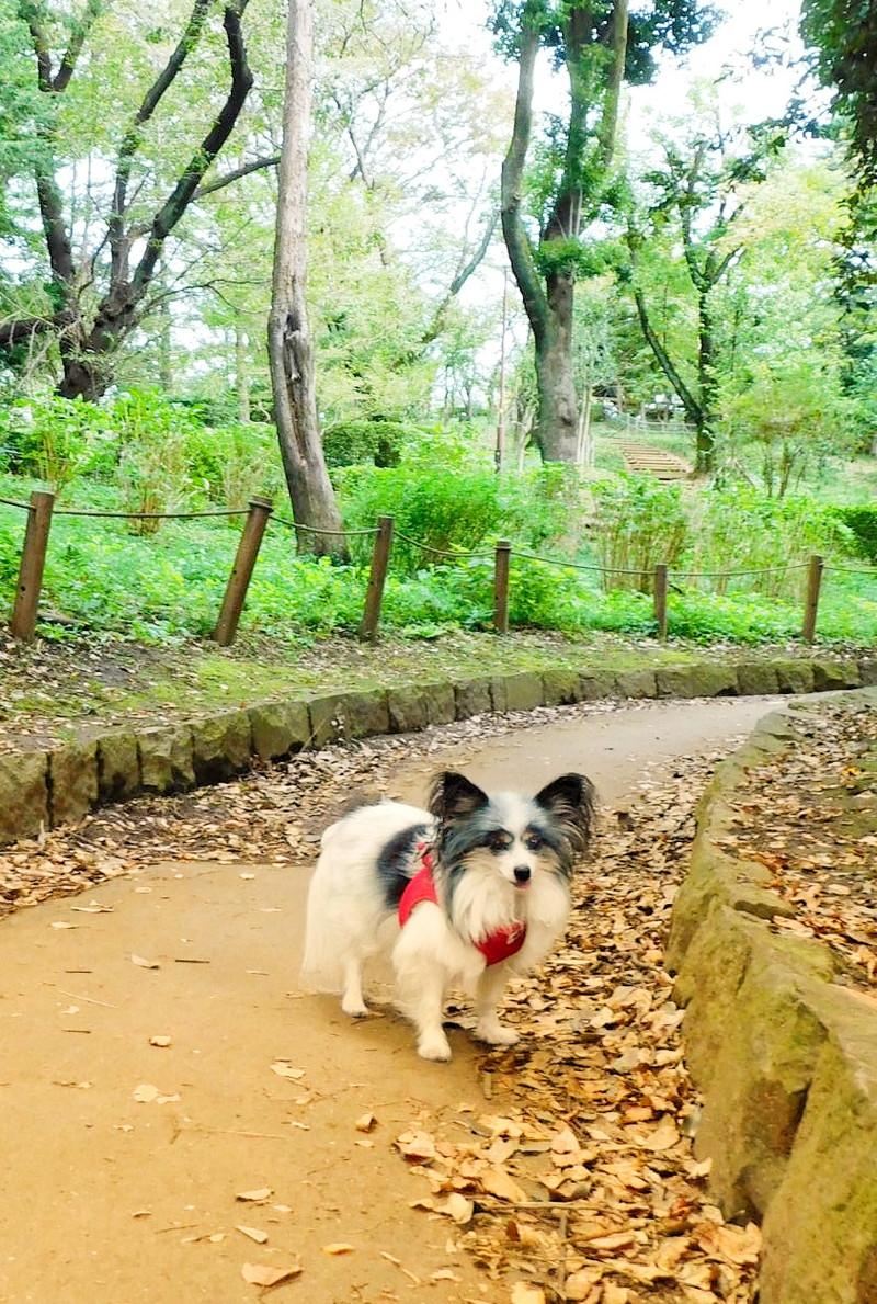 代々木公園より歩きやすく静かだよ