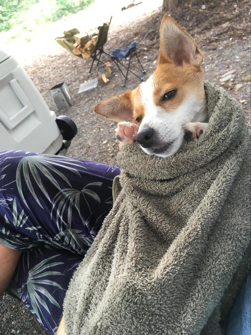 「ロックフィールドいとしろ」キャンプ場で初泳ぎでお疲れの愛犬ラスティー