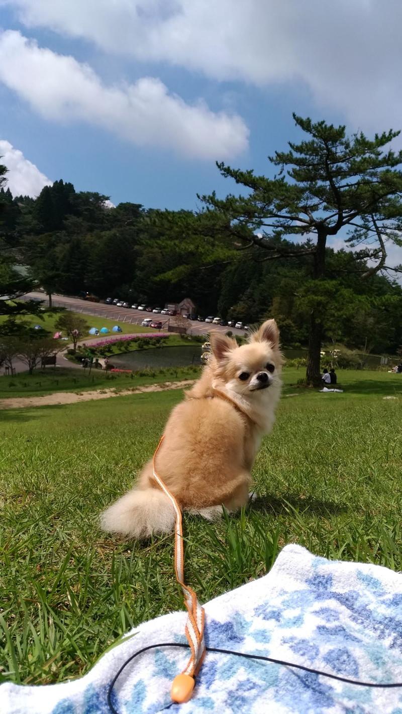 六甲山カンツリーハウスの丘の上からの景色