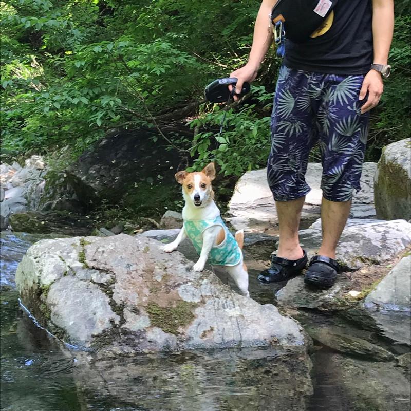 滝に向かう途中の浅瀬でニッコリの愛犬ラスティー