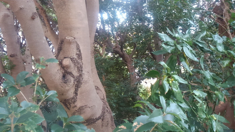 横浜俣野別邸公園の樹木