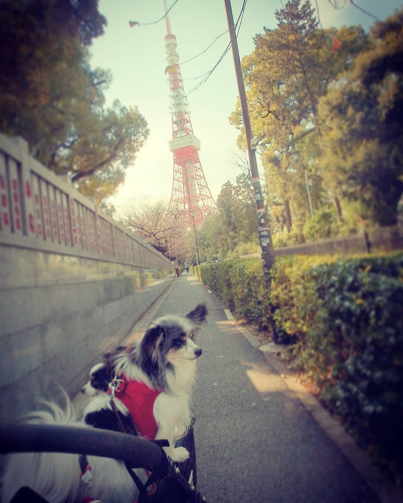 東京タワーが見えてきて思わずむくっと立ち上がったよ!