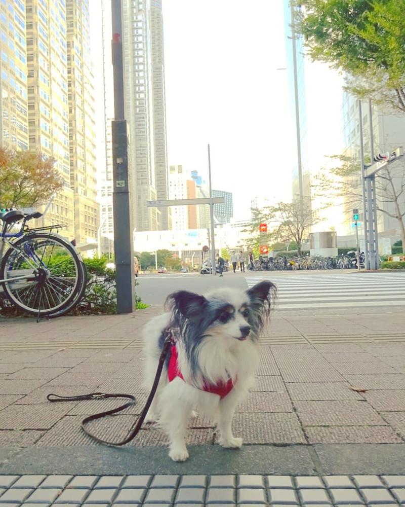 西新宿の街