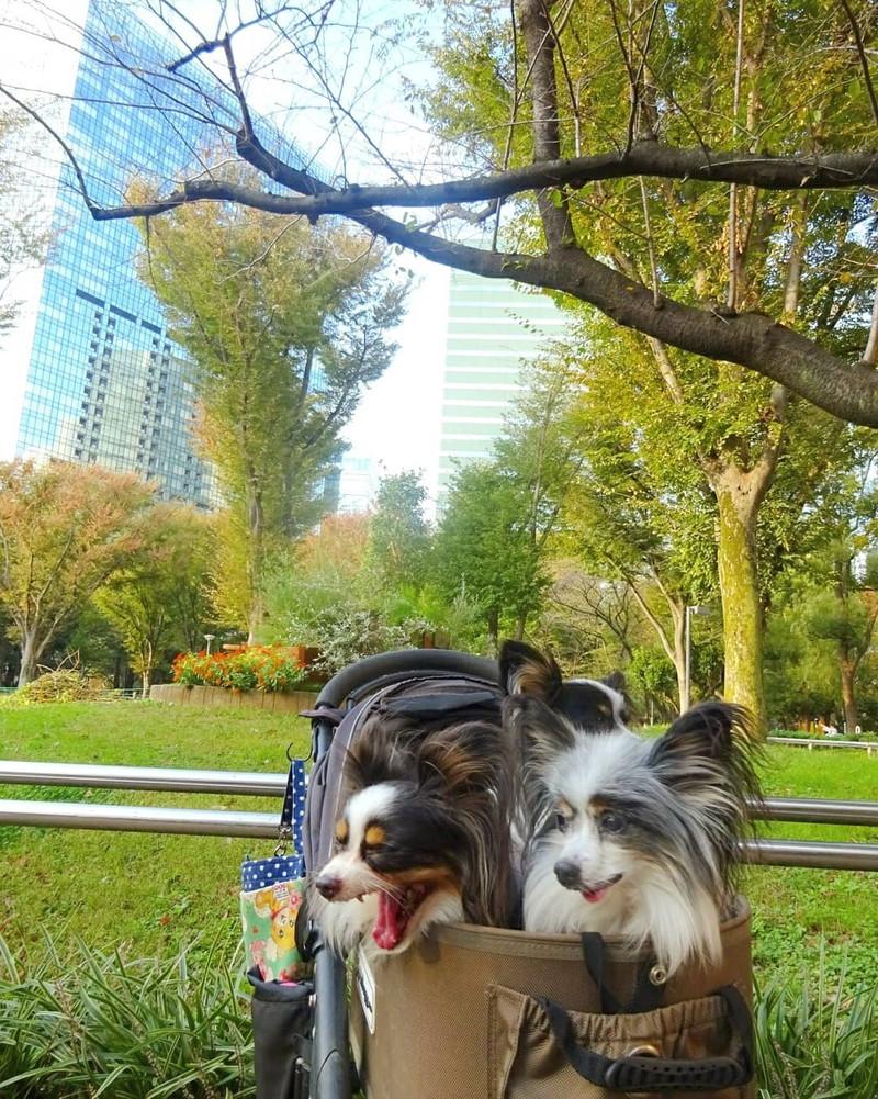 本当に高層ビルに囲まれた公園なんだ!