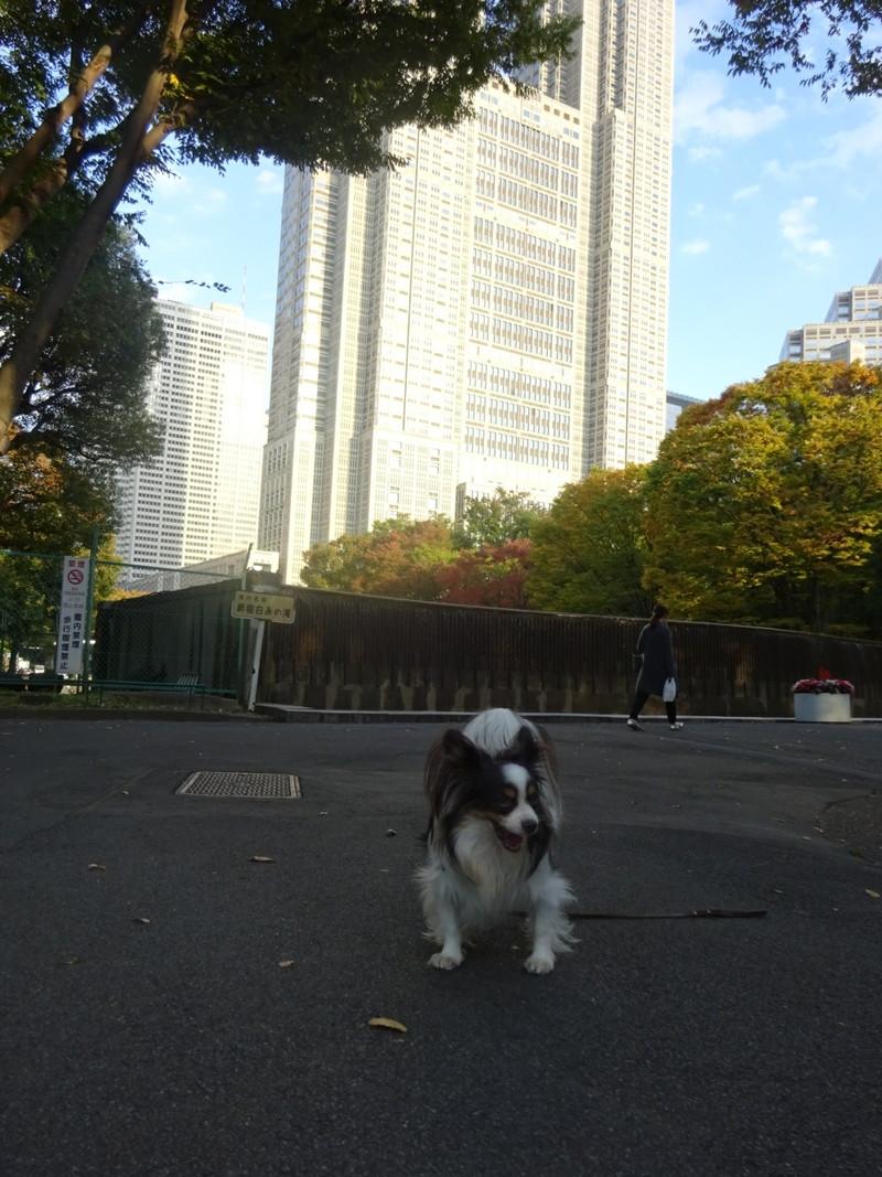 本当に公園敷地のすぐ向こうに都庁があるよ