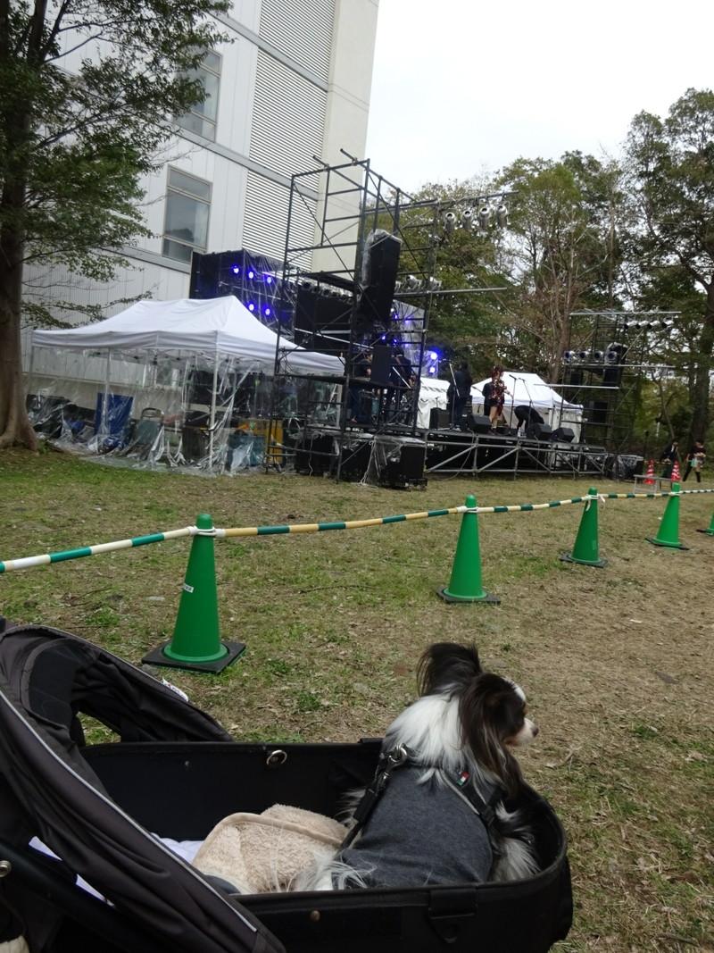 このステージは空いていたのでゆっくりライブを楽しんだよ