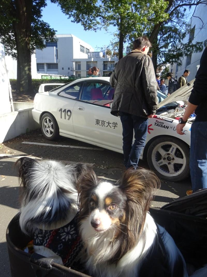 犬散歩で日頃自動車部の努力を見ているので、なんだか感動!