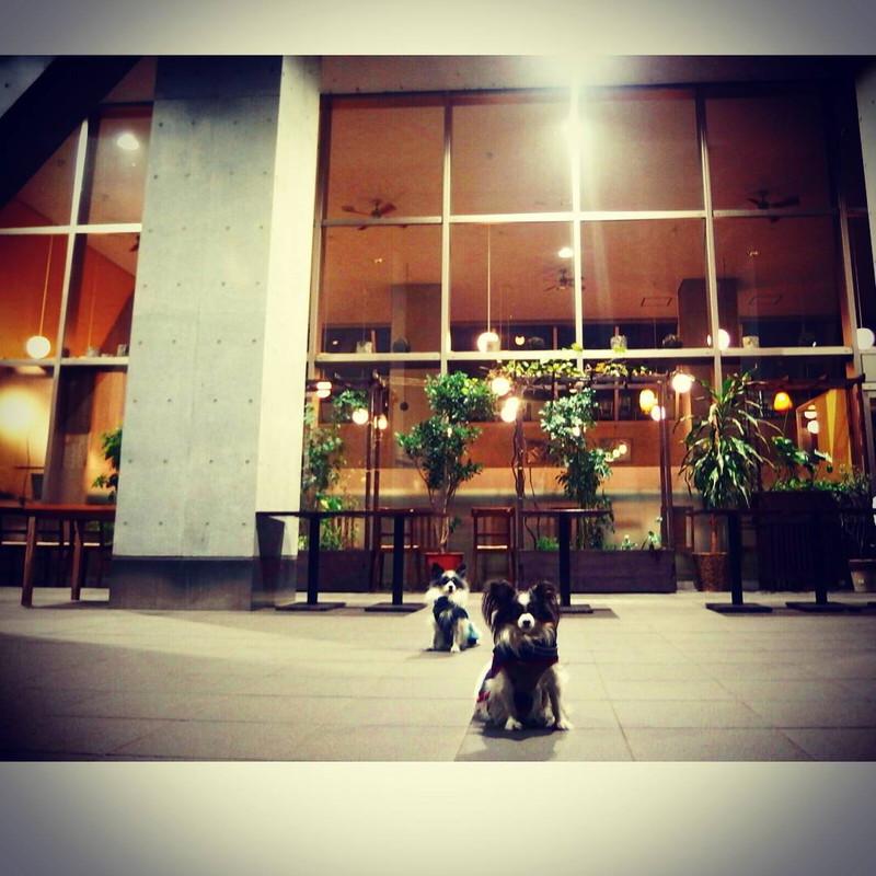 夜の駒場キャンパスのレストラン