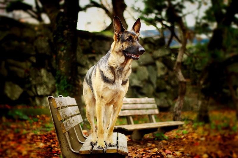 徳島中央公園のベンチに立っている愛犬