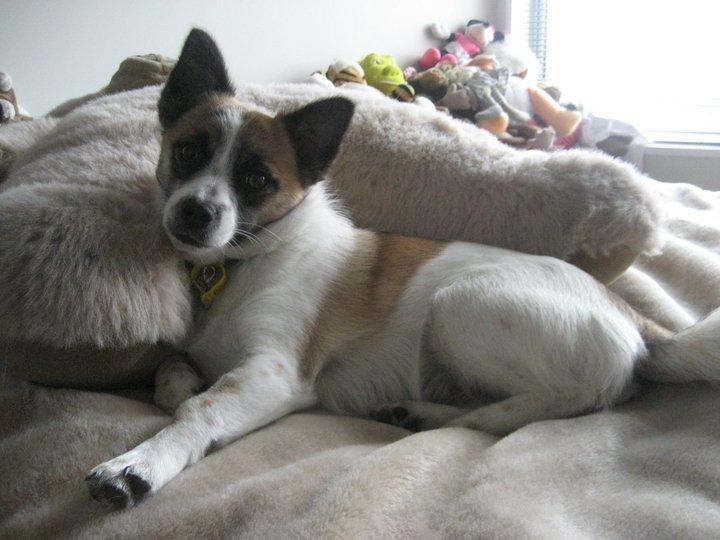 ベッドでくつろぐ愛犬トリクシー