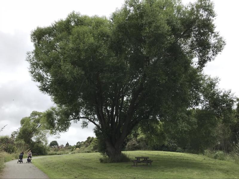 保護区内の、大きな木と、ピクニックの場所と散歩に来たママたち