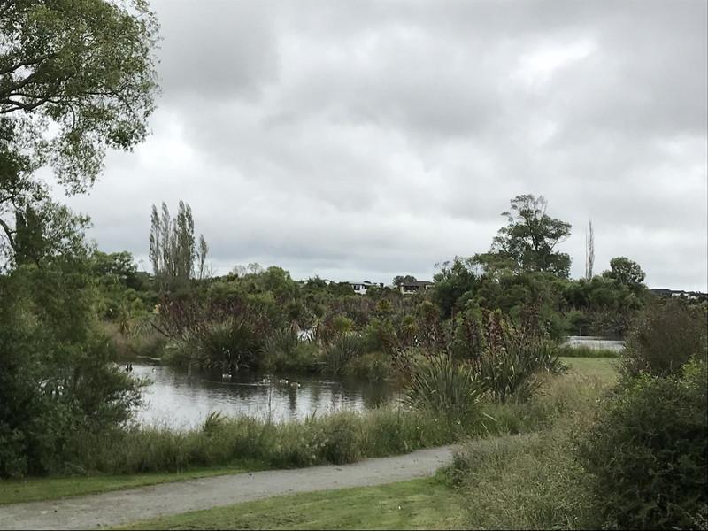 水鳥がくつろぐ、保護区内の池
