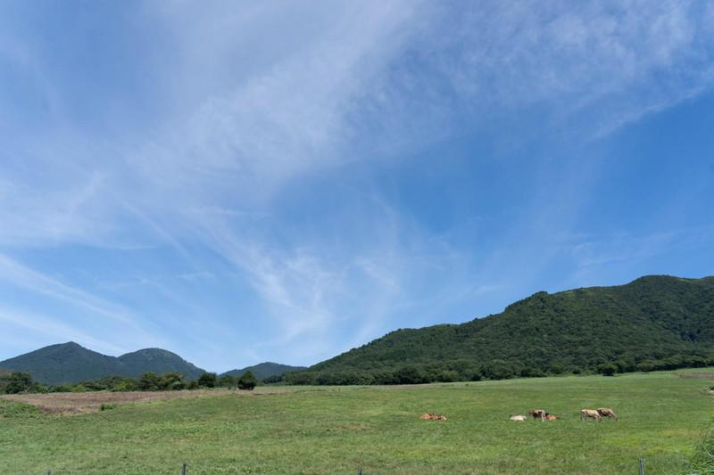 広々とした牧場。牛ものんびりしています。癒しの風景です。