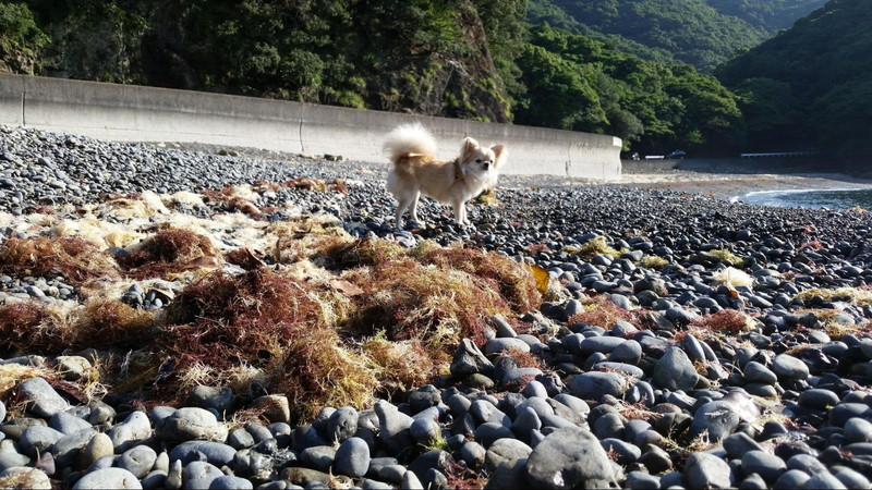 不思議そうに波を眺める愛犬