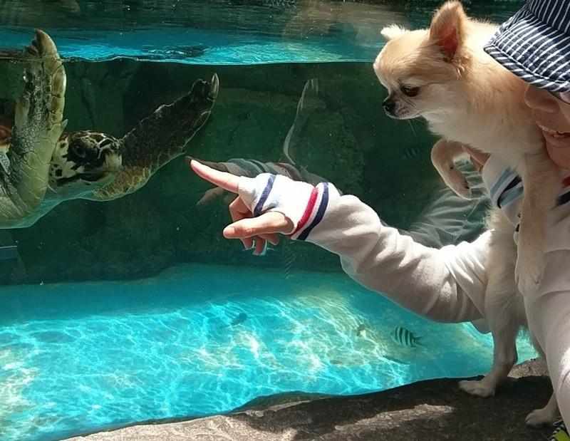 日和佐うみがめ博物館カレッタのうみがめと愛犬