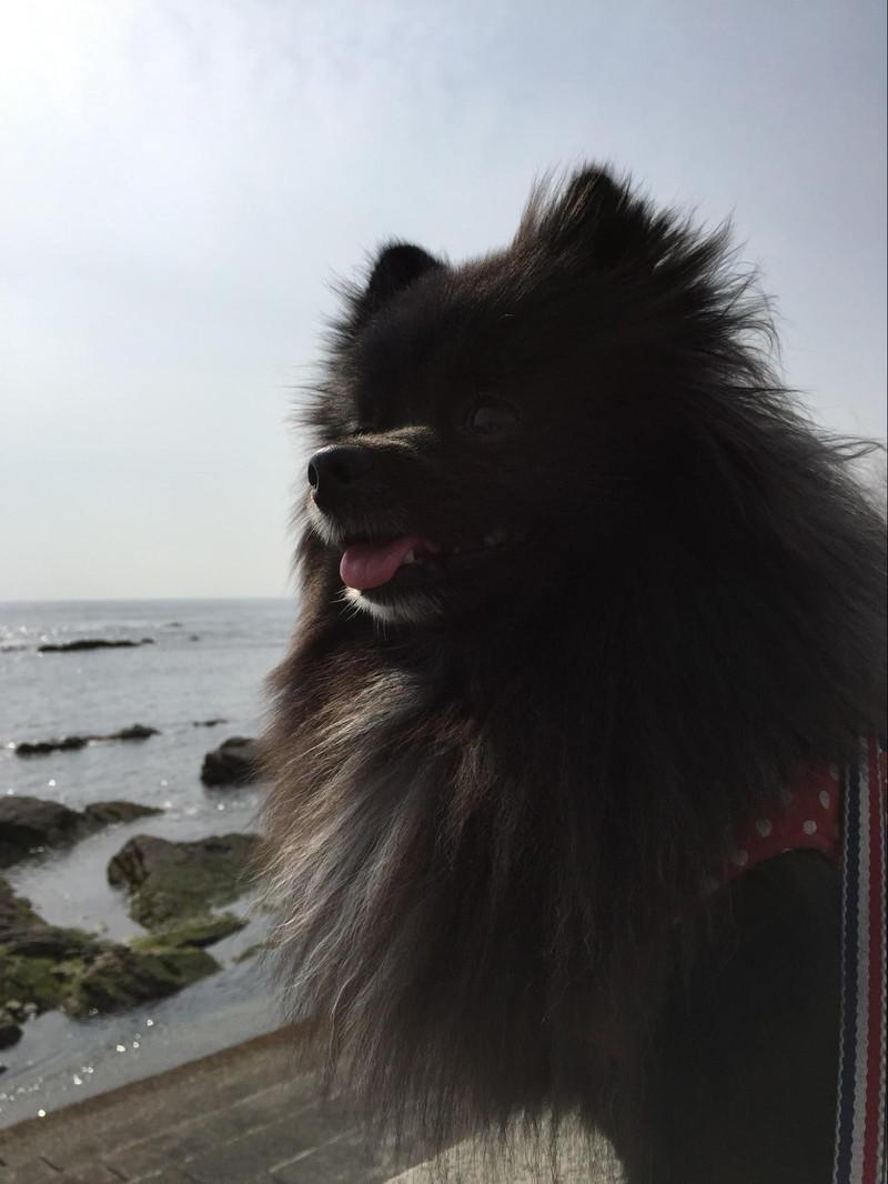 気持ちいい海に大喜びの愛犬シキナ