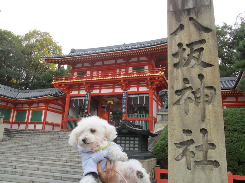 八坂神社前で持ち上げられて撮影されている愛犬