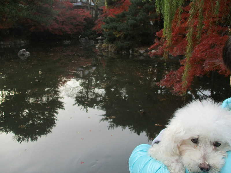 円山公園途中にある池と紅葉